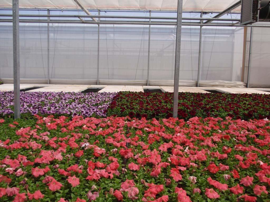 Татьяна выращивание цветов 89